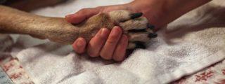 83% des Français seraient obligés d'euthanasier leur chien en cas de coup dur…